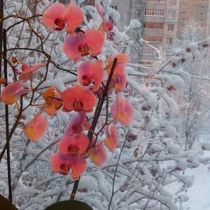 Мое зимнее лето
