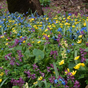 Апрельское разноцветье...
