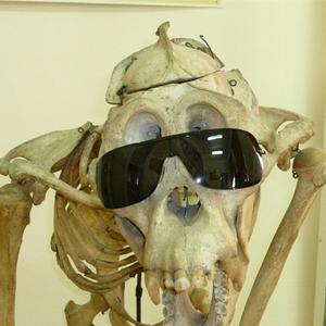 Homo sapiens к концу дачного сезона =))