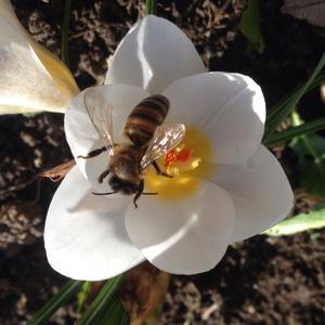 Так выглядит Весна