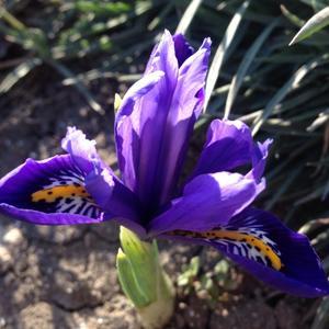 Синяя птица...  с фиолетовым оперением