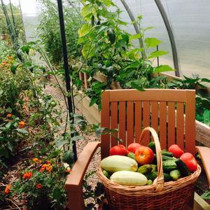 Кабачок, томат, огурчик ... Всё в корзинку и на стульчик! Ловим фокус в объектив - создаём фотоархив =)