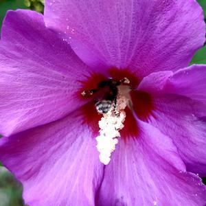 Чья-то мохнатая попка торчит - пыльцу собирает,а может быть спит =)