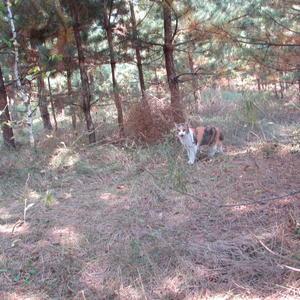 Наша кошка в близлежащем лесу