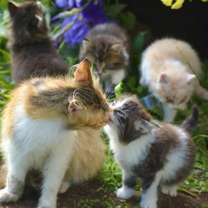 Мамочку люблю! Мамочку целую!