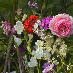 Цветет баклажан и таволга. Цветут колокольчики розы и герани