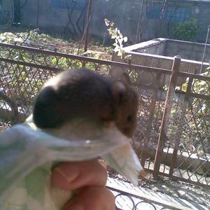Мышонок-шалун
