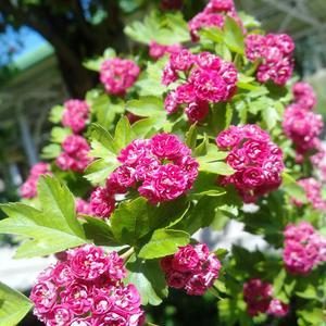 Щедрое цветение