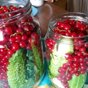 Огурцы в красной смородине