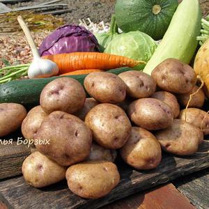 Свежие овощи с картофелем