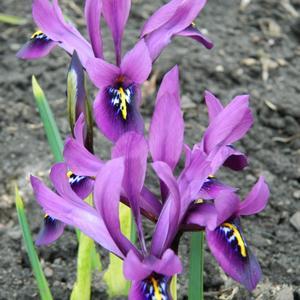 Первые ириски)))) 23 марта)