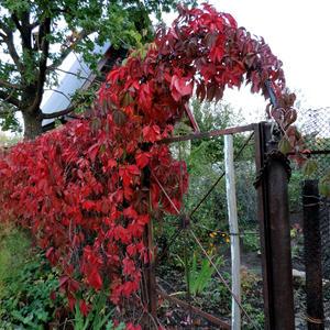 """Красный """"динозавр"""" защищает сад от непрошеного вторжения"""
