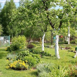 Отцвели уж почти все тюльпаны в саду...