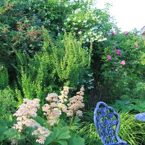 Уголок отдыха в цветущем саду