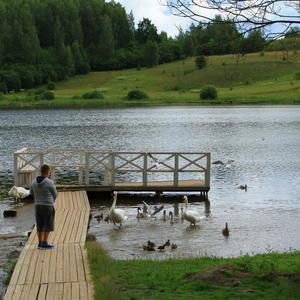 Кормление птиц с мостика на Мальском озере (ст. Изборск)