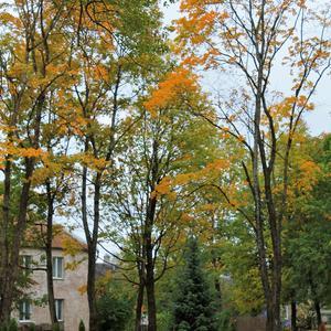 Осень в сквере городском