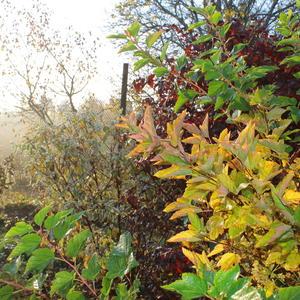 Еще раз про туман и краски осени в саду...