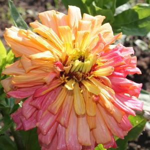 Самая необычная расцветка