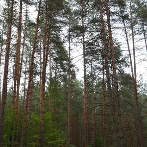 дорога в деревню через лес