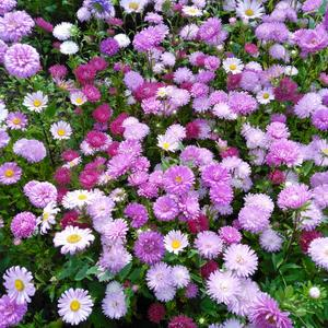 Цветочный ситец
