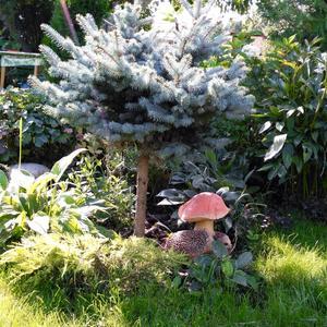 Сказочный уголок сада