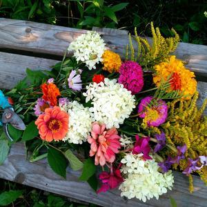 Цветущий август