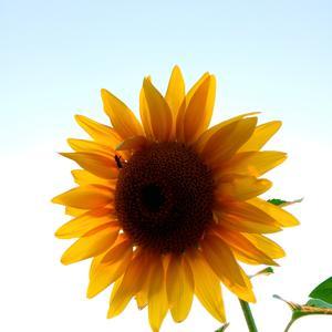 Луч солнца золотого