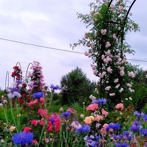 Цветочный калейдоскоп