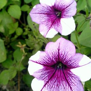 Неожиданная расцветка