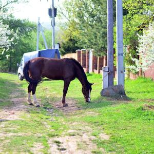 Прогулка по поселку