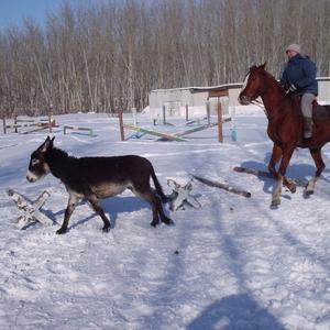Зимняя забава - догони осла