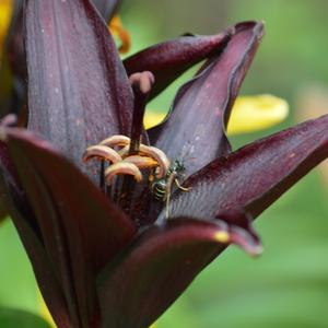 Маленькая пчелка села на цветок...