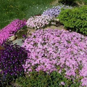 Цветет альпийская горка