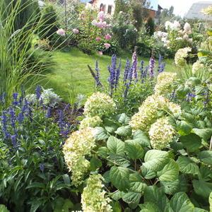 Небольшой газон, украшенный цветами и декоративными кустарниками