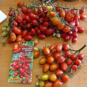 Черри томаты снимаем кистями