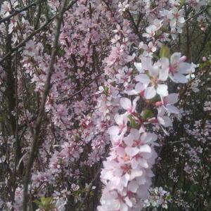 Весна на даче))