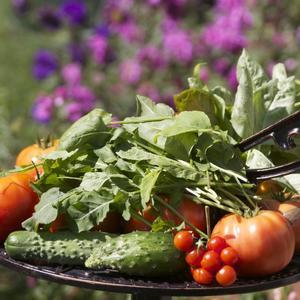 Утренний сбор овощей