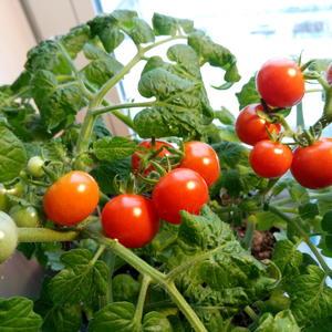 Предновогодний урожай