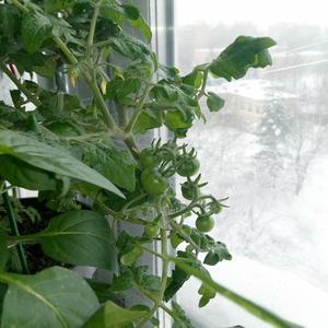 А за окном - зима