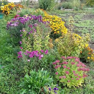 Цветы в октябре грустят по солнцу, по лету и по людям, которые их сажали...