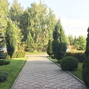 Мощеная дорожка, оформленная по бокам туями и кустарниками