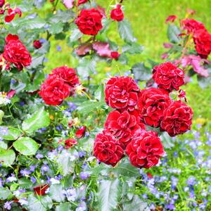 уДачно-цветочное лето