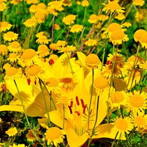 Золотые россыпи лета