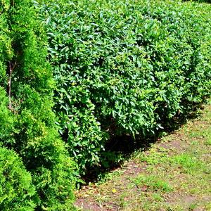 Зеленый эко заборчик