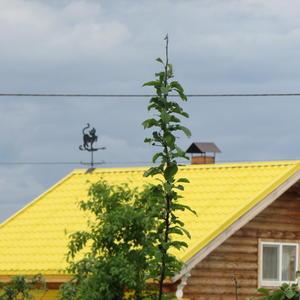 Весёлая крыша с котом