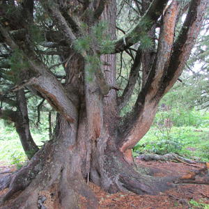 Вот такие деревья бывают...