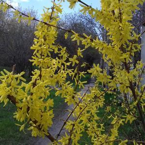 У нас Весна! Совсем Весна!!!
