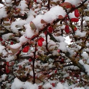 Как рано Зима предъявляет свои права в этом году!!!