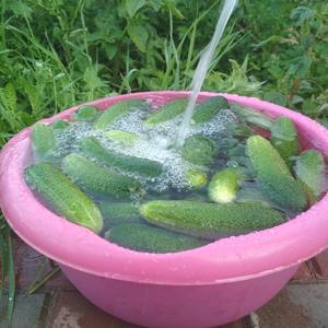 Пупырчатый урожай