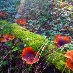 Необыкновенные грибы в сказочном лесу!